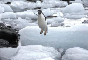 flying-penguin