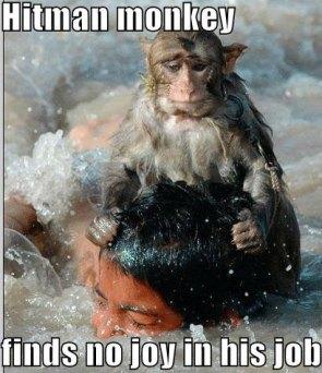hitman monkey finds no joy in his job