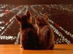 Kitties & Cities