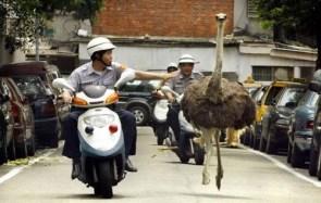 Ostrich Police