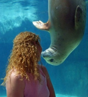 Seal Kissing A Red Head