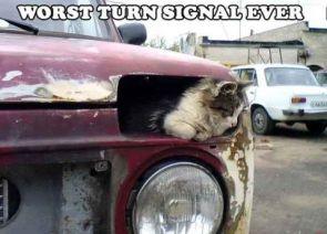 Worse Turn Signal Ever