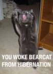 you woke bearcat from hibernation