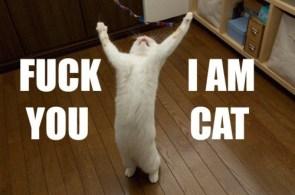 Fuck You – I Am Cat