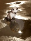 kitten aspirations