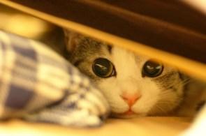 kitty eyes