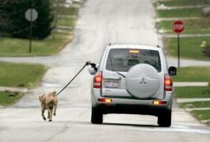lazy dog walker
