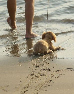 Reluctant Beach Dog