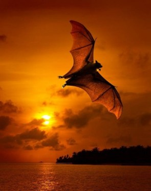 Sunset Bat