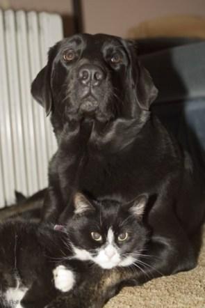 Dog and Cat Cuddle