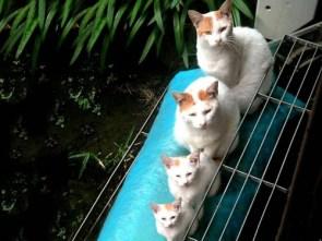 Kitty Family