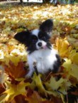 Silly Dog in leaves