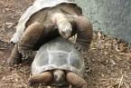Turtle Fuck