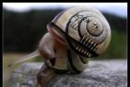 Born To Kill Snail