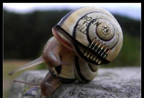 Born To Kill Snail