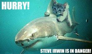 Hurry!  Steve Irwin is In Danger!