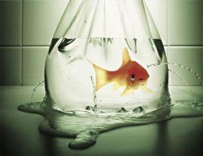 Leaky Fish Bag