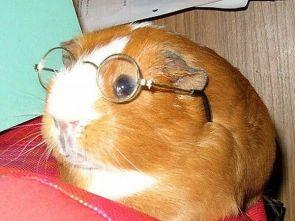 Smart Piggy