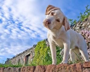 Curios Puppy