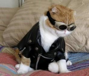 Goggle Cat