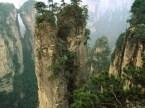 Rock Top Trees