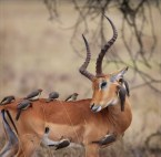 Impala Cleaning