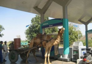 Camel Fuel Up