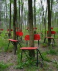 chair trees