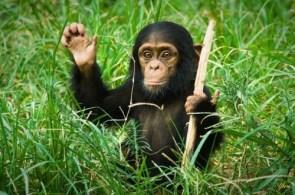 Friendly Gorilla