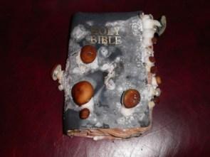 Moldy Bible
