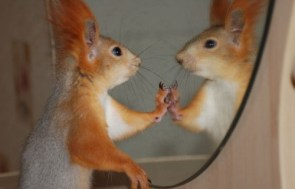 Squirrel Reflections