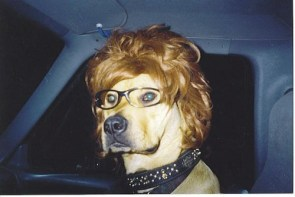 a dog with a wig on its head