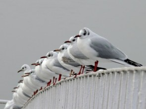 Birds on a rail