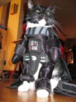Dark Vader Cat