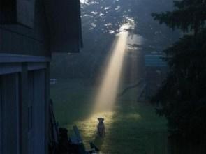 Holy Dog