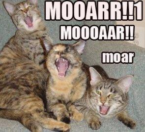 Moar Kittens