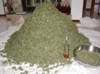 pile of weed