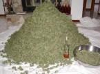 pile of weed