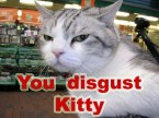you disgust kitty