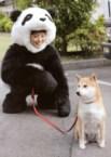 ayaueto panda