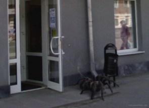 Pet Spider