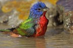 wet colorful bird