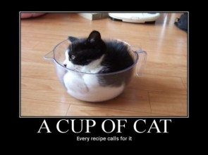 a cup of cat – every recipe calls for it