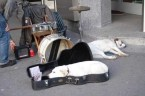 guitar dog bed