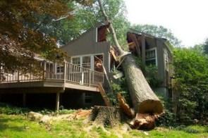 House Vs Tree