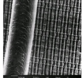 Human hair next to your average transistor array from the 1980s