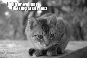 I'm in ur wallpapr looking at ur mouz
