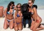 Monkey Beach Grope