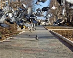 Pigeon of TERROR