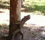 tree humping branch